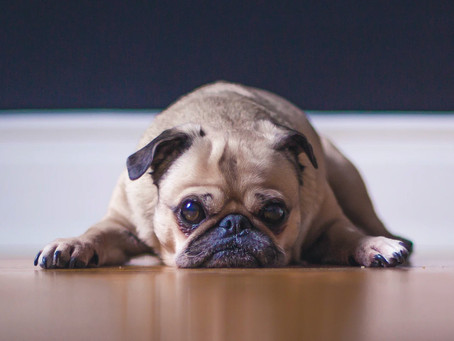 Raining outside? 5 easy and free tips to exercise your dog indoors