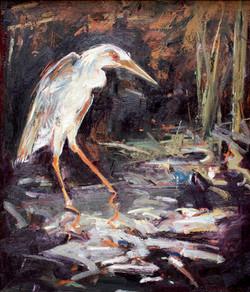 Night Heron Stalker