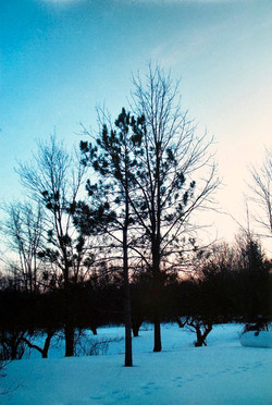 Winter Sunset at the Farm