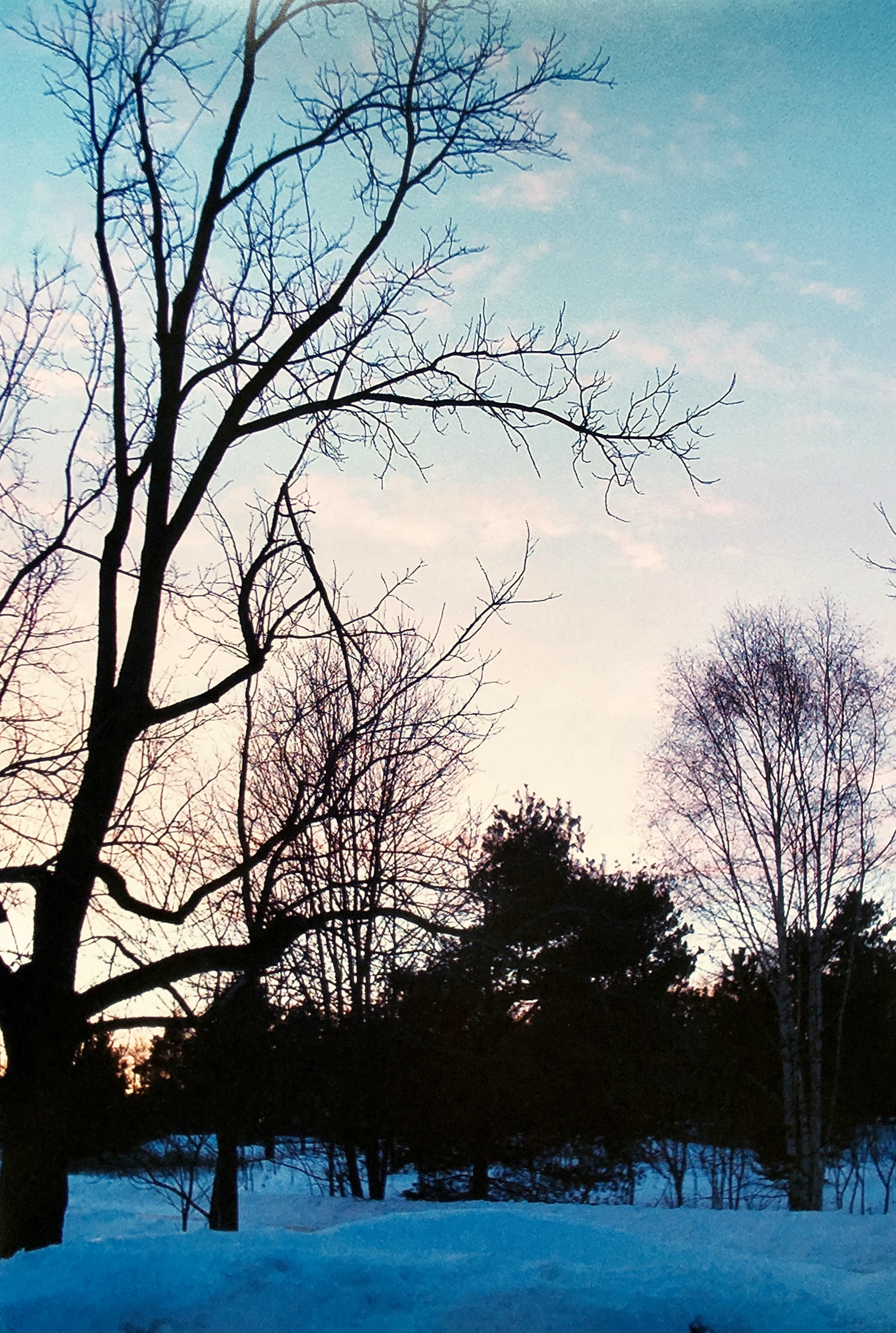 Lacy Trees at Winter Sunset