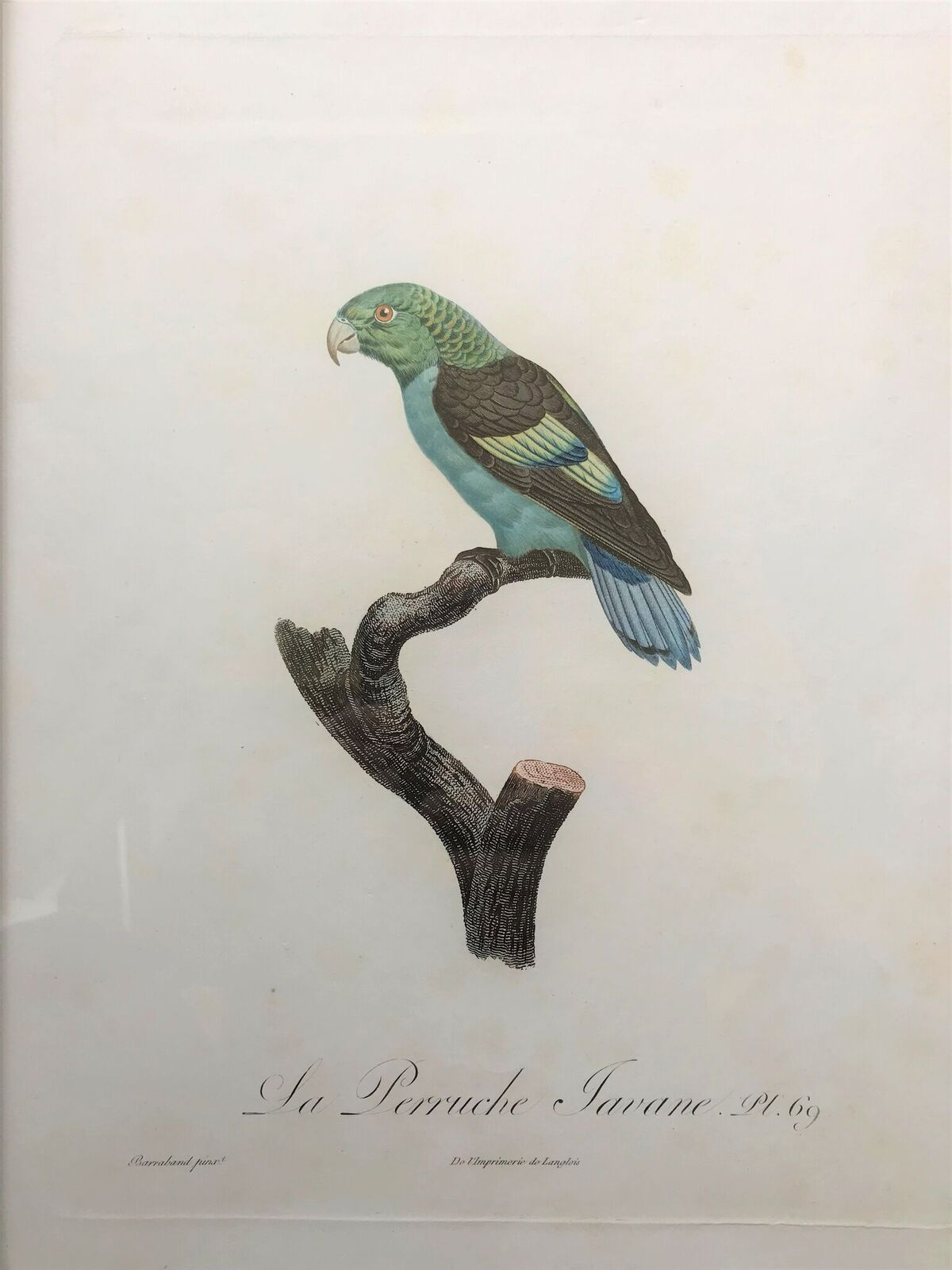 La Perruche Javane Pt 69