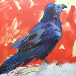 Solo Crow
