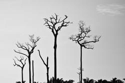 Alta Floresta, MT - Brasil