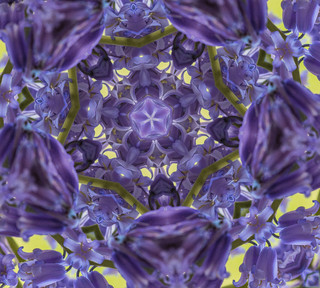 Bluebell Kaleidoscope