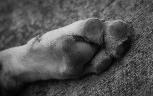 Puppy's Paw