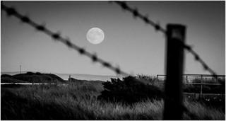 Through the wire.jpg