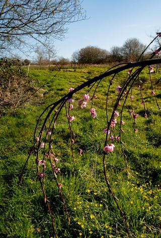 Blossom by Caroline Starzewski