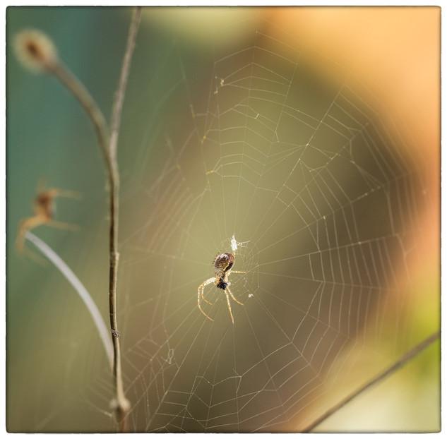 Spider Snack by Nicola George
