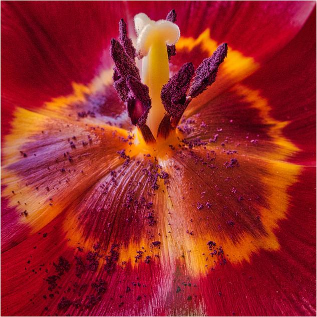 Floral Sex by John Hufferdine