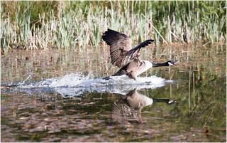 Landing Attack.jpg