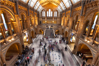 The Natural History Museum.jpg