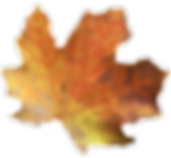 DC%252520leaves_edited_edited_edited.png