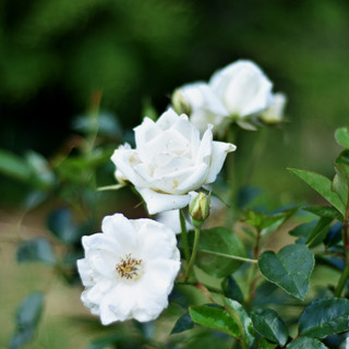Natural Floral Decor