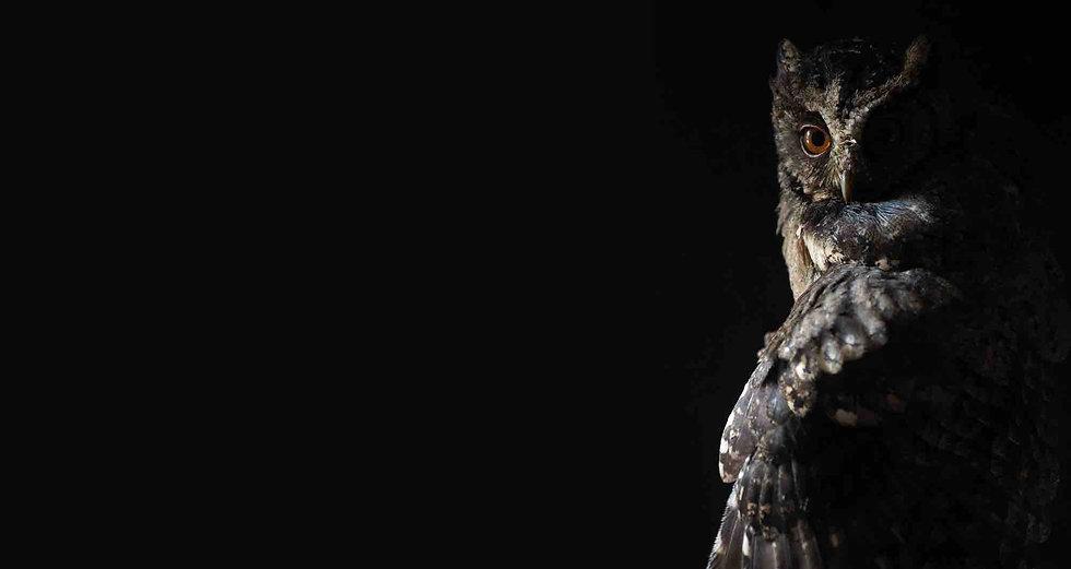 Owl - laser- swir- LED- searchlight 2.jp