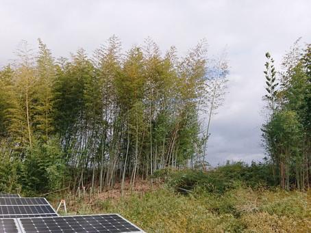 太陽光発電所メンテナンス実施