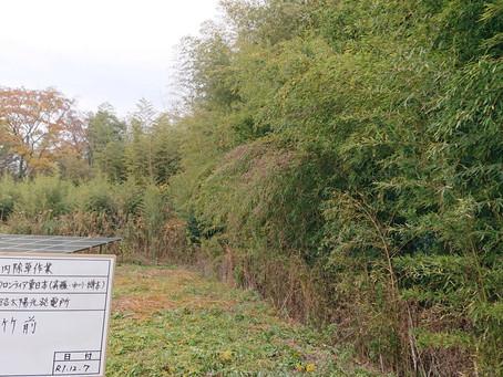 太陽光発電所 場内除草及び伐採作業実施