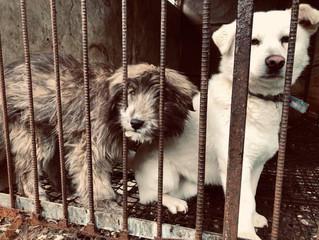 Byul-gyo Dog Meat Farm is Finally History!