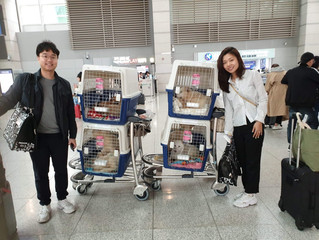 Byulgyo dog rescues are available for adoption!