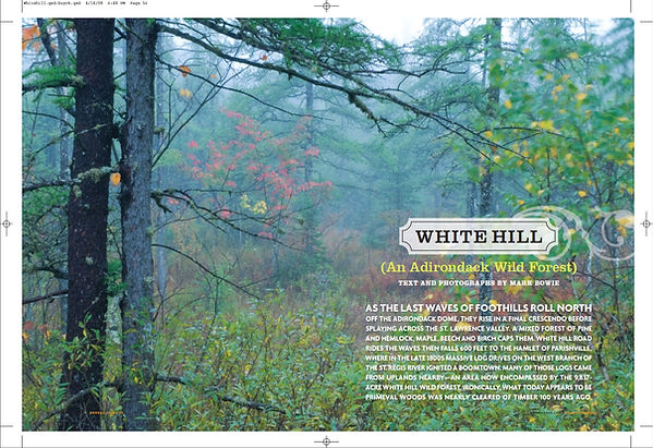 White Hill WF article header.jpeg