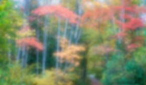 Fall Foliage Along Rich Lake, Adirondacks, NY