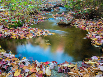 Autumn Leaves in a Tributary Stream of Death Brook Falls, Adirondacks, New York