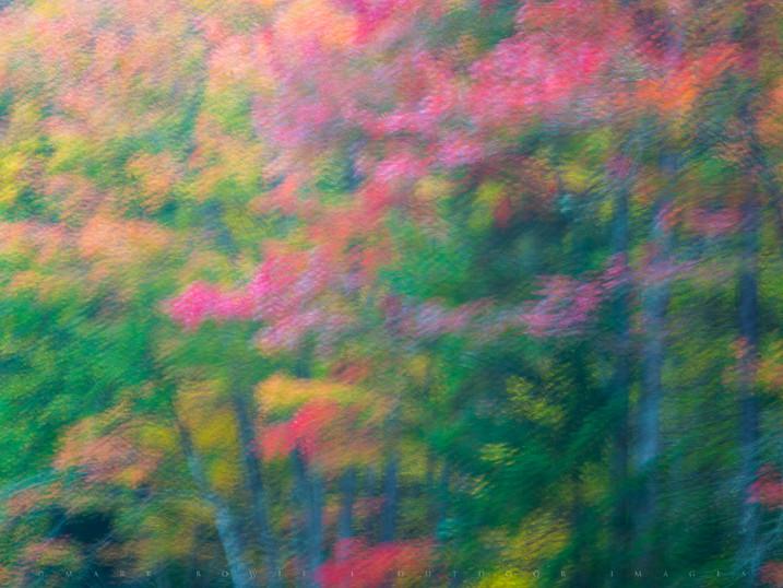Autumn Canvas, along the Raquette River, Adirondacks, New York