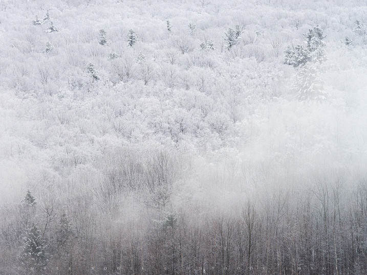 Flocked Hill & Fog, Above Cheshire Lake, The Berkshires, Massachusetts