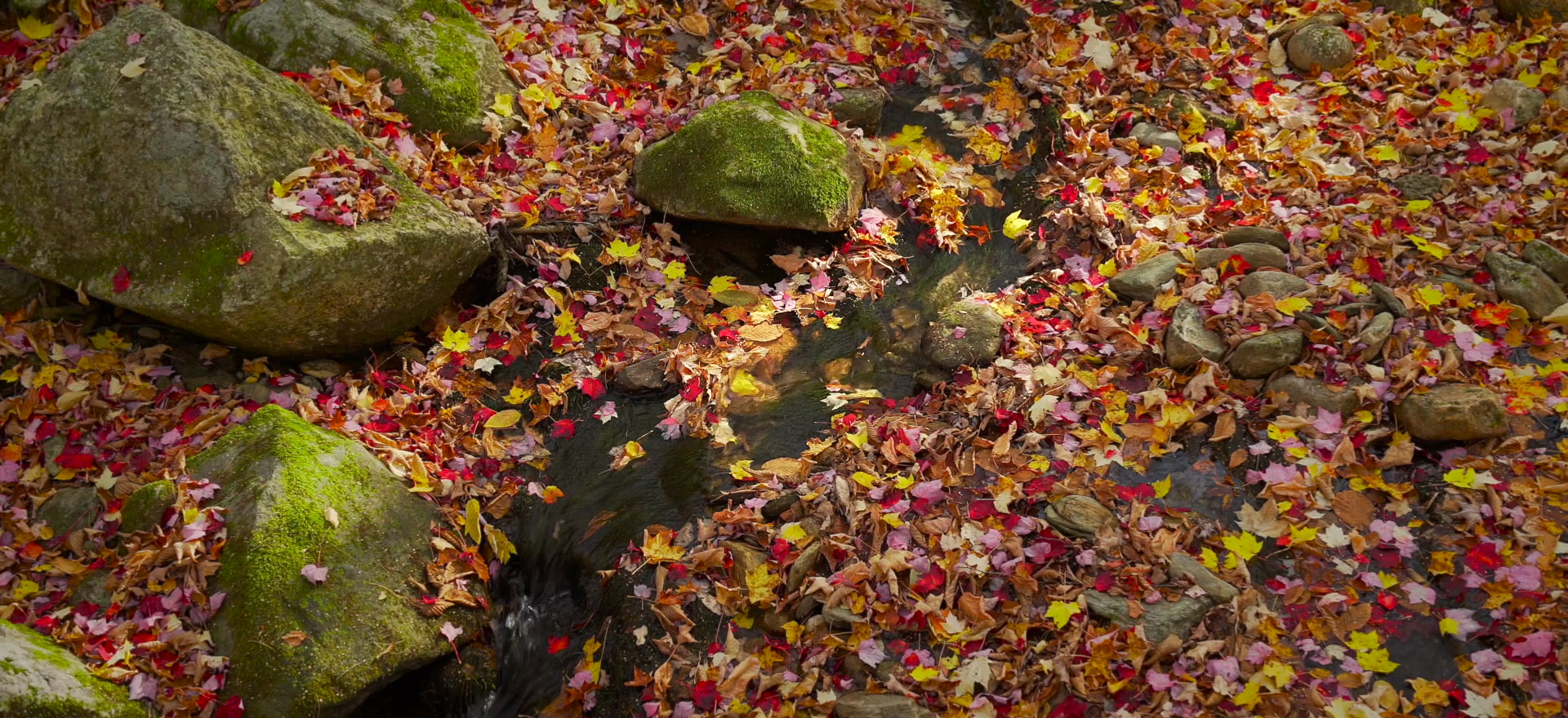 By Autumn's Light, Tannery Brook, Savoy State Forest, The Berkshires, Massachusetts