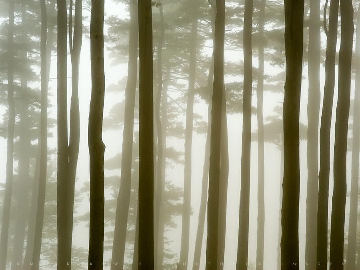 Foggy Silhouettes, Pontoosuc Lake, The Berkshires, Massachusetts