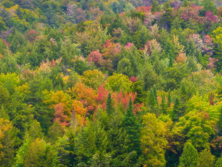 Oncoming Autumn, Inlet, Adirondacks, New York
