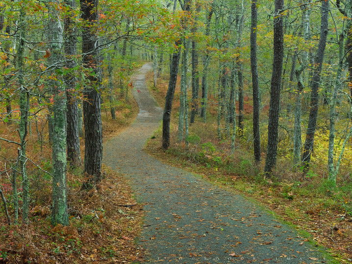 Path Through Glacial Country, Nickerson State Park, Cape Cod, Massachusetts