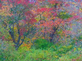 Painted Woods, Mass Audubon Long Pasture Wildlife Sanctuary, Cape Cod, Massachusetts