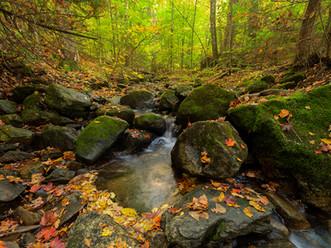 Autumn Leaves on Stream Boulders, Putnam Pond State Campground, Adirondacks, New York