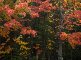 Autumn Tapestry in the Rain, Eighth Lake State Campground, Adirondacks, New York