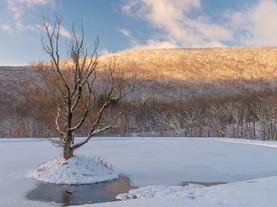 Pond's View to a Fresh Winter Morning, Hancock, The Berkshires, Massachusetts