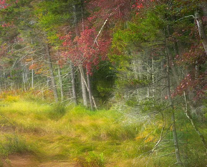 Waves of Marsh Grass, Cary Lake, Adirondacks, New York