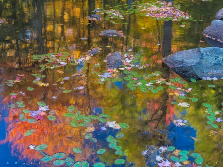 Wilderness Monet, Oliver Pond, Adirondacks, New York