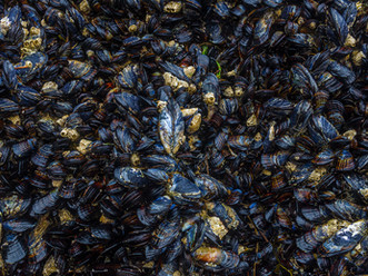 Mollusks, Bandon Beach, Oregon