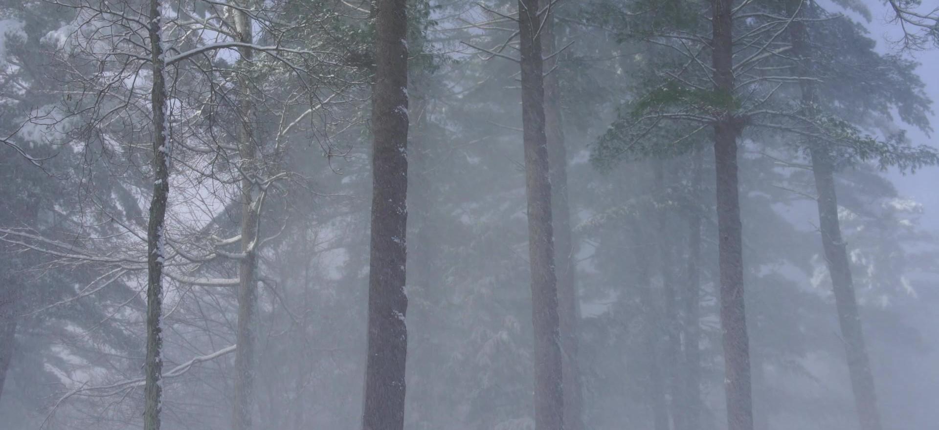 Snowfall, Lake George, New York