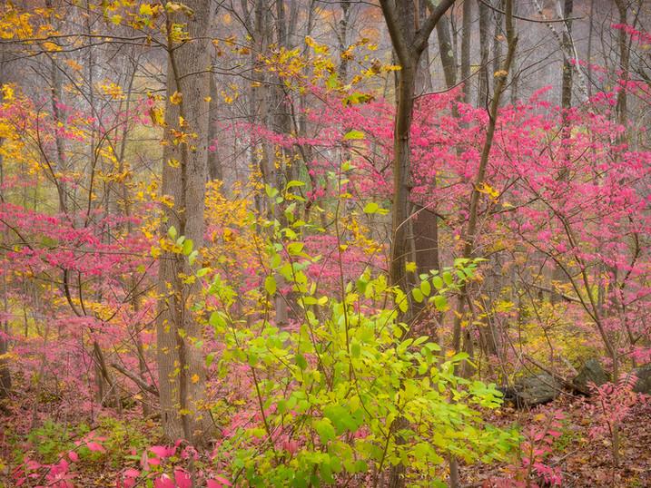 Fairytale Forest, Near Lee, The Berkshires, Massachusetts