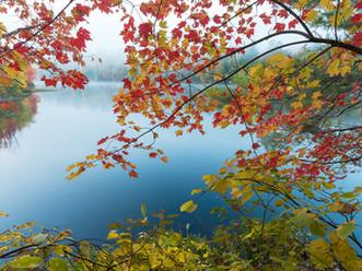 Fall Foliage and Fog, Palmer Pond, Adirondacks, New York