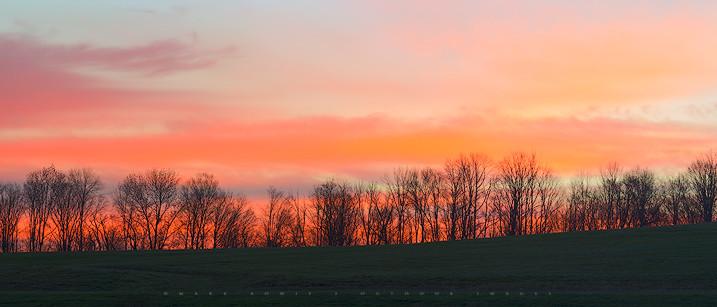 Trees Before Sunrise Pastel Panorama, Lanesborough, The Berkshires, Massachusetts