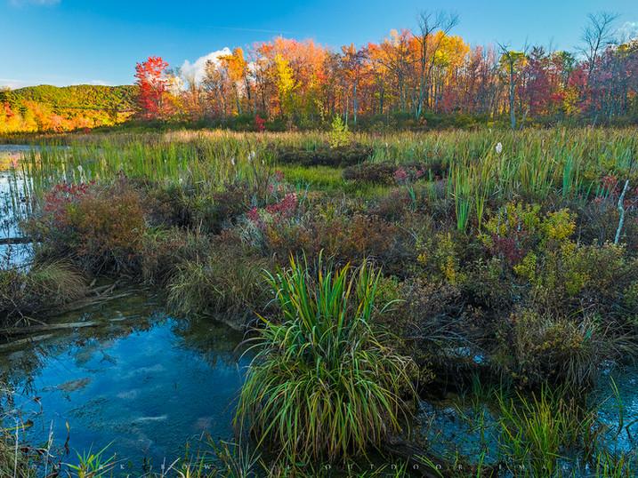 Autumn Marsh, Cheshire Lake, The Berkshires, Massachusetts