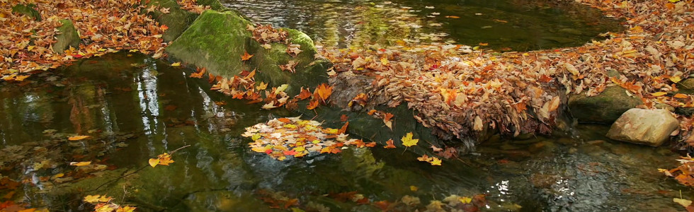 Autumn Pools, Tannery Brook, Savoy State Forest, The Berkshires, Massachusetts