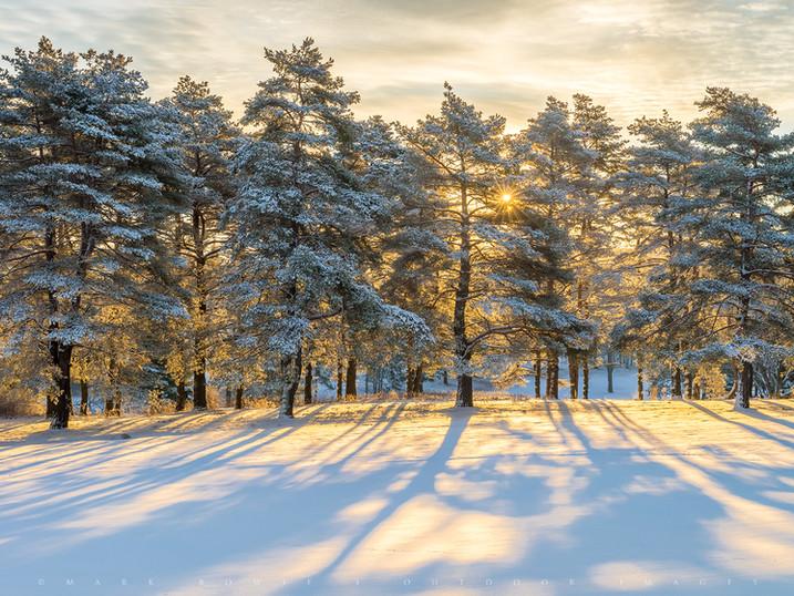 Winter's Shadows, Pittsfield, The Berkshires, Massachusetts