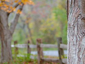 Autumn Dream, Mass Audubon Long Pasture Wildlife Sanctuary, Cape Cod, Massachusetts