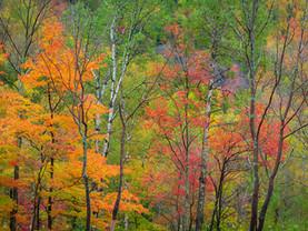 Autumn's Regalia, Near Chapel Pond, Adirondacks, New York