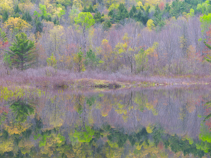 Spring Reflections in a Quiet Pond, Essex County, Adirondacks, New York