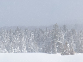 Regal Evergreens in Snow Storm, Lake Abanakee, Adirondacks, New York