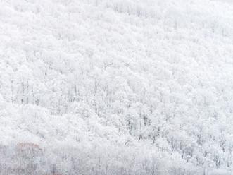 Snow-Flocked Hill, Above Cheshire Lake, The Berkshires, Massachusetts